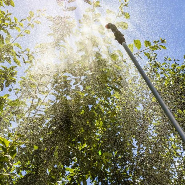 Durango tree spraying